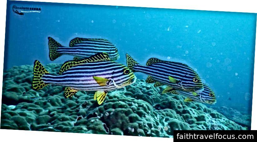 Ấn Độ ngọt phương Đông Ấn Độ - Quần đảo Lakshadweep