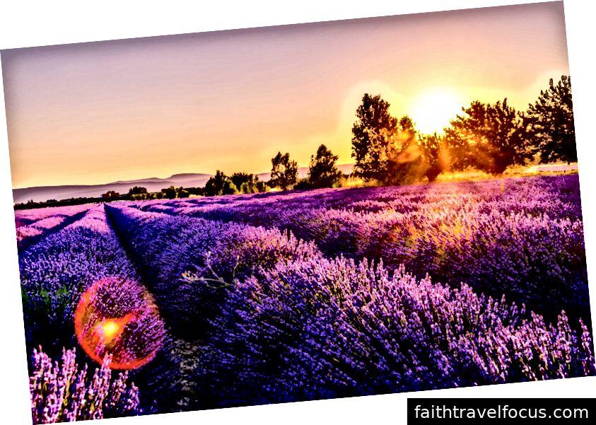 [Cánh đồng hoa oải hương ở Provence - - qua Bapt]