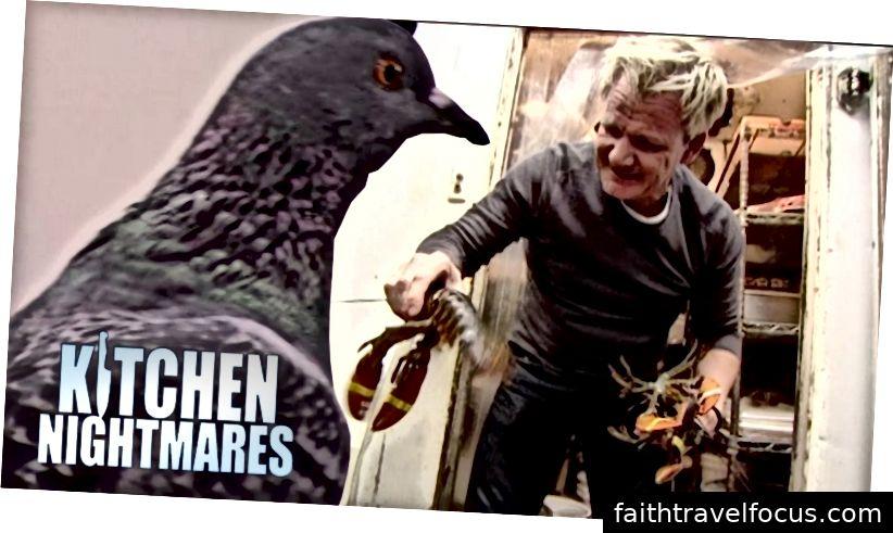 Có một con chim bồ câu làm đầu bếp luôn luôn là khó khăn